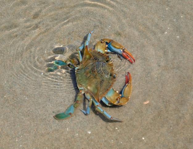 Crabe avec une variété de couleurs dans une rivière