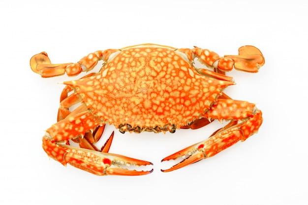 Crabes cuits à la vapeur sur fond blanc.