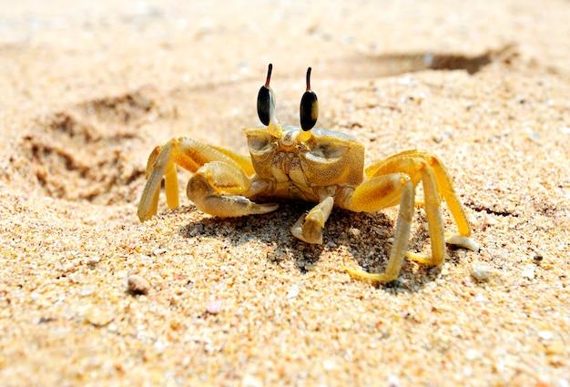 Crabes à l'état sauvage sur l'île du sri lanka