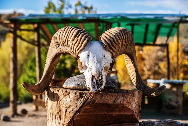 Crâne de bélier avec des cornes onwooden block chui steppe kyzylchin valley automne dans les montagnes de l'altaï