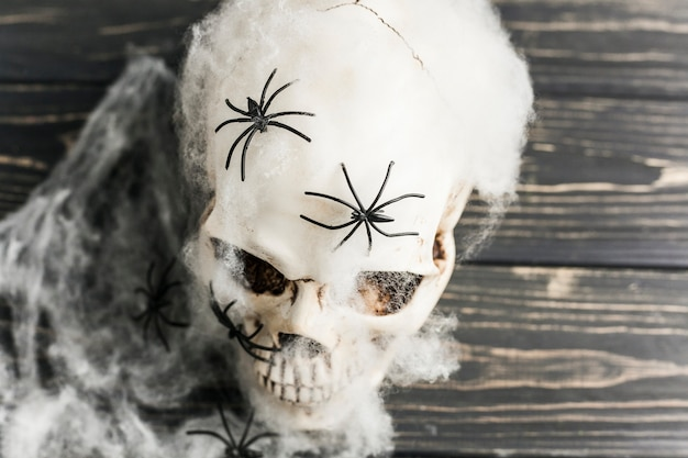 Crâne blanc avec des araignées en ouate