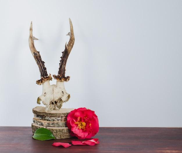 Crâne de chevreuil avec camélias pour la décoration.