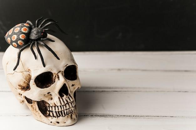 Crâne effrayant avec une araignée sur le dessus