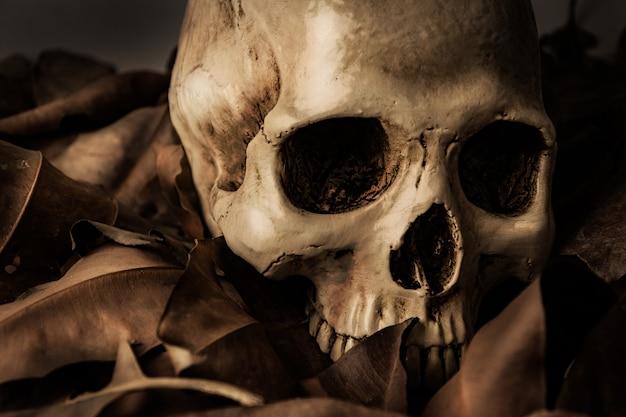 Crâne avec feuille sèche, nature morte