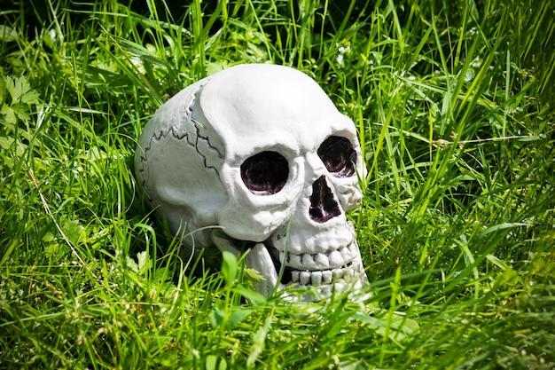 Crâne humain allongé dans une herbe verte, éclairée par le soleil.