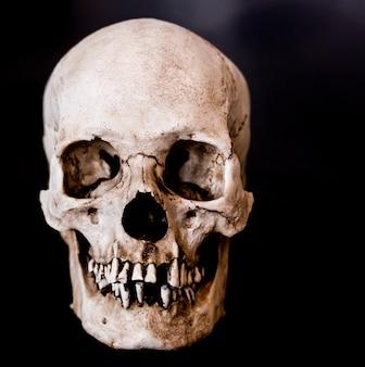 Crâne humain en fibre de verre faisant face sur un fond noir