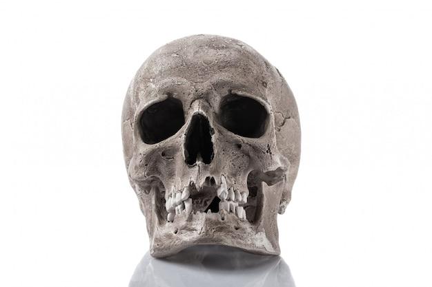 Crâne humain isolé sur blanc