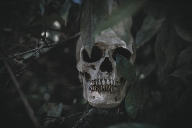 Crâne en saillie de l'herbe