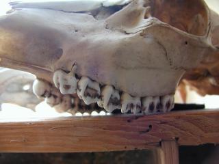 Crâne, sombre
