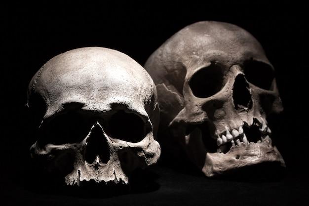 Crânes humains sur un fond noir.