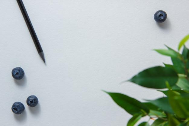 Un crayon avec des bleuets, plante sur fond blanc, vue de dessus. espace pour le texte