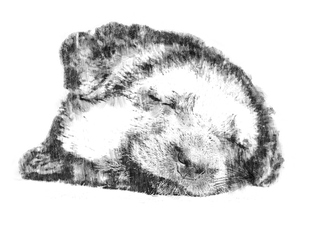 Crayon, dessin, fait main, mignon, chiot, triste, dessin, croquis, fond, sommeil, museau, fond sombre, isolé, blanc