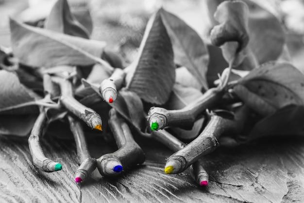 Des crayons de couleur ont poussé sur une branche d'arbre