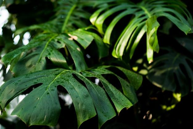 Création de feuilles vert tropical tropical.