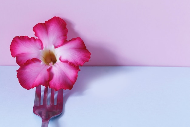 Créativité de la fleur rose avec une fourchette en acier inoxydable sur rose pastel et bleu