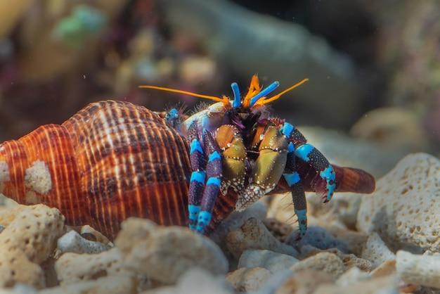 Créatures marines bouchent portrait