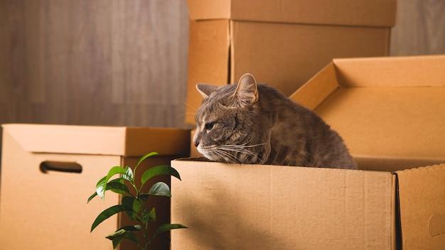 Créez des boîtes pour collecter des objets et déménager dans un autre appartement. nouveau concept de logement et de relocalisation.