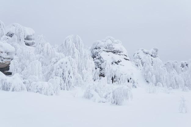 Crête de rochers enneigés et d'arbres couverts de givre sur un col de montagne en hiver