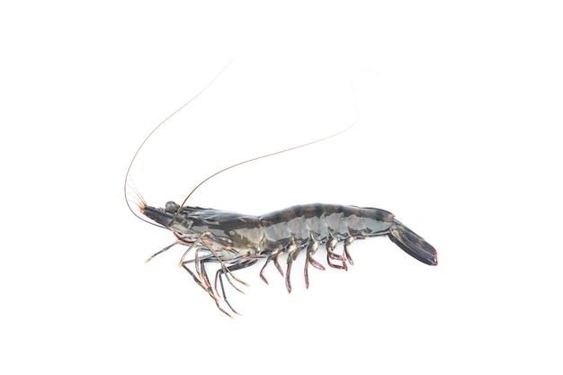 Crevettes fraîches ou crevettes sur fond blanc. crevettes crues isolés sur fond blanc.