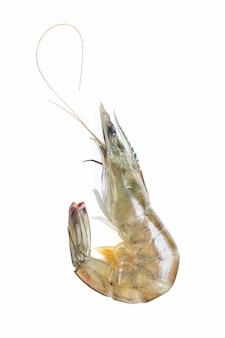 Crevettes fraîches / crevettes sur fond blanc