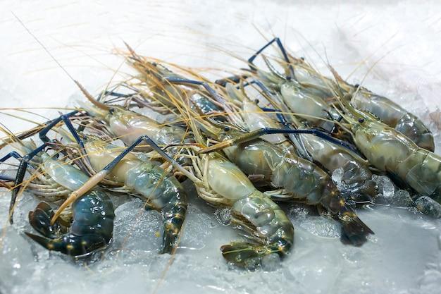 Crevettes fraîches grande taille sur la glace