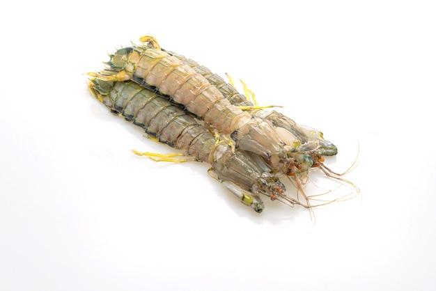 Crevettes mantes fraîches isolées sur tableau blanc