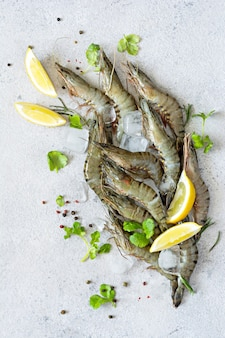 Crevettes tigrées fraîches avec des tranches de citron herbes et épices sur des glaçons sur une surface gris clair