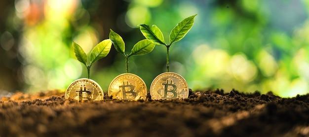 La croissance du bitcoin, les pièces bitcoin au sol et les feuilles poussent.