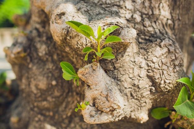 Croissance de la mousse sur une branche d'arbre dans la forêt tropicale.