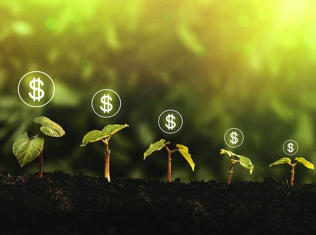 Croissance des semences et de l'argent. commencez