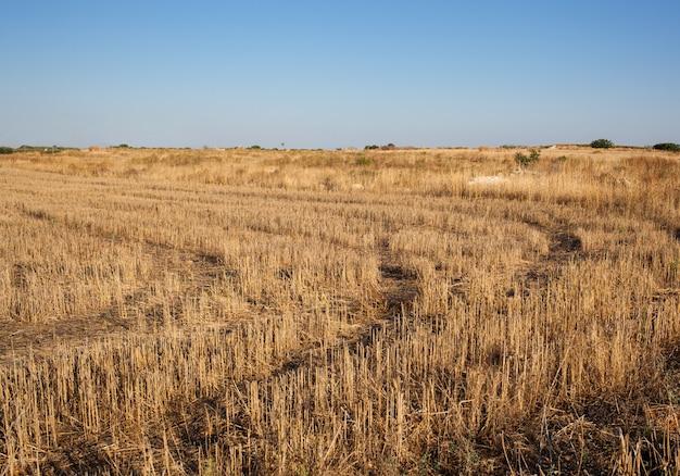 Crop circles sur le terrain