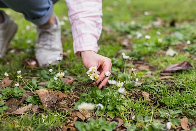 Crop girl cueillant des fleurs sur prairie