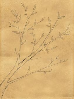 Croquis de plante de branche sur tableau noir