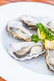 Cru fond mollusques bivalves agrandi
