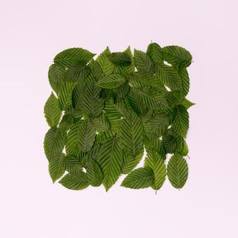 Cube botanique de feuilles et fond blanc