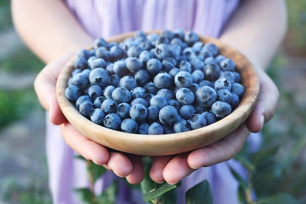 Cueillette de bleuets. main féminine cueillant des bleuets. notion de récolte.