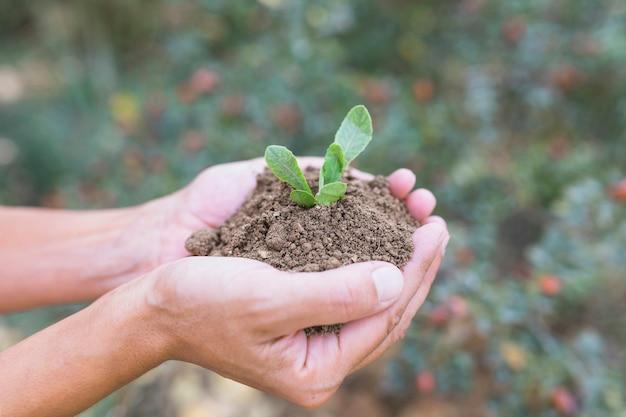 Cueillir les mains avec du sol et des semis