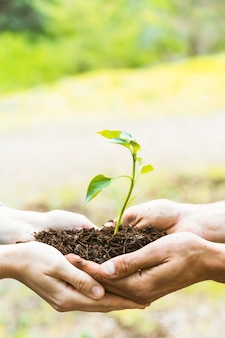 Cueillir les mains avec le sol et la germination