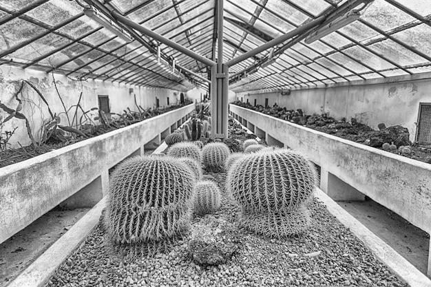 Culture de cactus et autres plantes succulentes à l'intérieur d'une serre