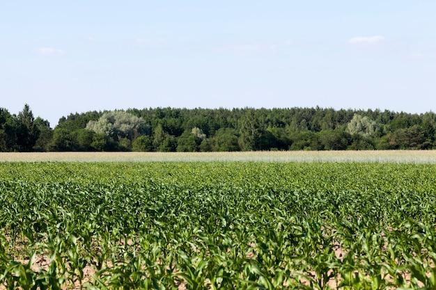 Culture de céréales pour nourrir la population, un domaine agricole où l'on cultive des céréales