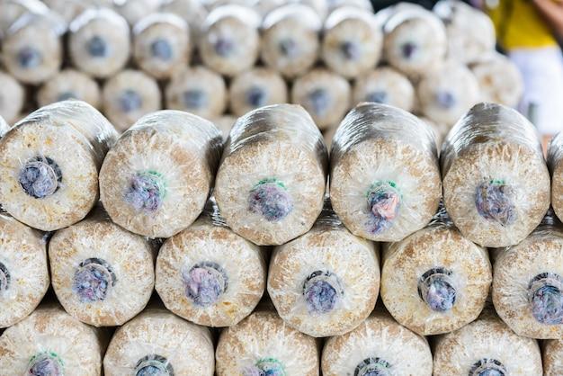 Culture de champignons dans le sol et la sciure de bois