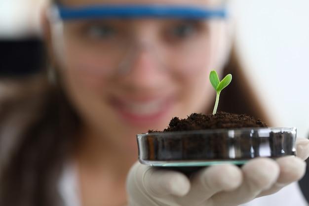 Culture et croissance des plantes vertes en laboratoire.