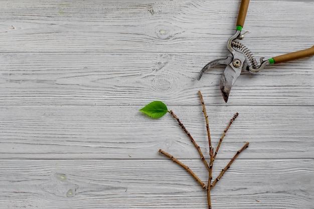 Culture des plantes