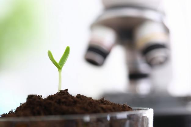 Culture réussie de germes verts en laboratoire.