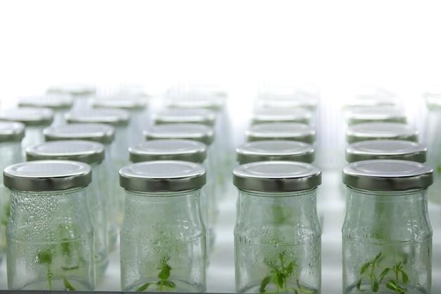 Culture de tissus végétaux sur étagère dans un laboratoire d'usine pour la conservation.