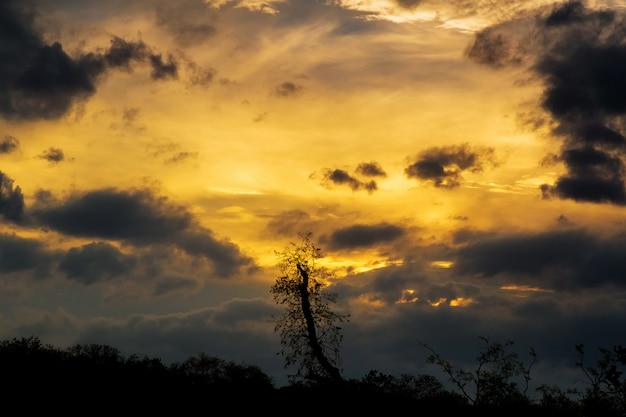 Cumulus sunset clouds avec le coucher du soleil