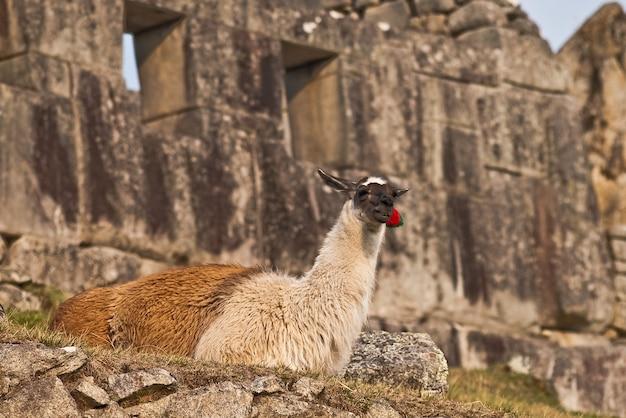 Cuzco pérou machu picchu monument errant