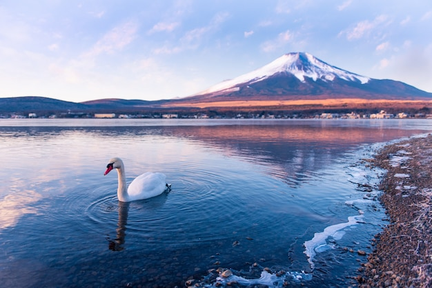 Cygne dans le lac yamanaka avec le mont fuji