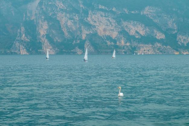 Un cygne sur le lac de garde. un voilier et un cygne. italie.