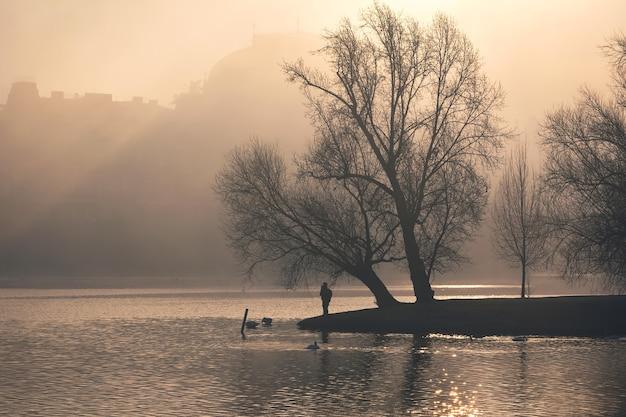 Cygnes dans la rivière vltava près du théâtre national le matin brumeux avec la lumière du soleil dorée